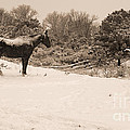 Snow Bound Horse by J L Woody Wooden