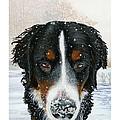 Snow Bumper by Liane Weyers