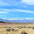 Snow Capped by Marilyn Diaz