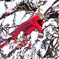 Snow Cardinal by William Fox