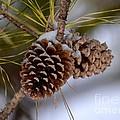 Snow Cones by Maria Urso