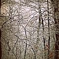Snow Cover Forest by Dawdy Imagery