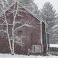 Snow Covered Birch Tree And A Red Barn. by Don Landwehrle