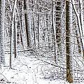 Snow Covered Forest 4 by Pete Hendley