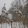 Snow Covered Forest  by Lene Maria Soendermoelle Steffensen