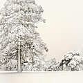 Snow Covered by John Anderson