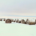Snow Covered Round Bales by Chris Harris