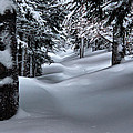 Snow Covered Trail by Steven Reed