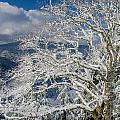 Snow Covered Tree And Winter Scene by Greg Nyquist