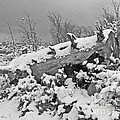 Snow Covered Tree Log In Black And White by Kenny Bosak