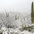 Snow Day In The Desert  by Saija  Lehtonen