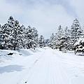 Snow Day by Pam Garcia