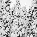 Snow Day by Susan Serna