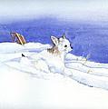 Snow Dobby by P Anthony Visco