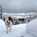 Snow Dog by Jeremy Fleming