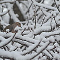 Snow Dove by Paula Card