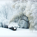 Snow Dream by Julie Palencia
