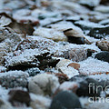 Snow Dusted by Susan Herber