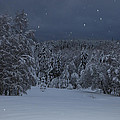 Snow Falling In A Forest by Ulrich Kunst And Bettina Scheidulin
