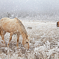 Snow Falling On Horses by Theresa Tahara
