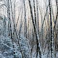 Snow Falls On The Alders  Astoria by Robert L. Potts