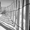 Snow Fence B/w by Kirsten Dykstra