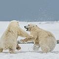 Snow Fight by Scott Wickward