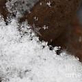 Snow Flake by Michael Mooney