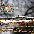 Snow From Heaven by Vicki Hawkins