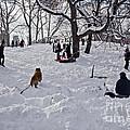 Snow Fun by Madeline Ellis