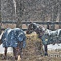 Snow Horses by Janice Byer