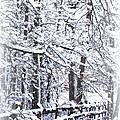 Snow-img-2174-merry Christmas by Travis Truelove