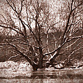 Snow Imp 1 - Tree Covered With Snow January 2014 by Leif Sohlman