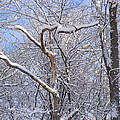 Snow In Connecticut by Lisa Cortez