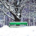 Snow In The Park by Alexander Senin