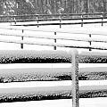 Snow In The Pasture by Tina Meador