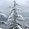 Snow Laden Tree by Leone Lund