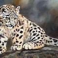 Snow Leopard Cub by David Stribbling