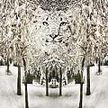 Snow Leopard by John Anderson
