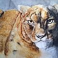 Snow Leopard by Julie Wedean