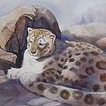 Snow Leopard by Marilyn Jacobson