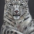 Snow Leopard by Nicole Zeug