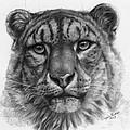 Snow Leopard - Panthera Uncia Portrait by Svetlana Ledneva-Schukina