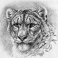 Snow Leopard - Panthera Uncia by Svetlana Ledneva-Schukina
