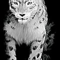 Snow Leopard  by Terry DeLuco