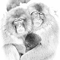 Snow Monkey Character Study Vi by Michele Steffey