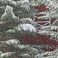 Snow On A Pine Tree With A Red Barn. by Don Landwehrle