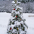 Snow On Christmas Tree 2 by Duane McCullough