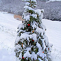 Snow On Christmas Tree by Duane McCullough