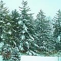 Snow On The Evergreens by Tahlula Arts